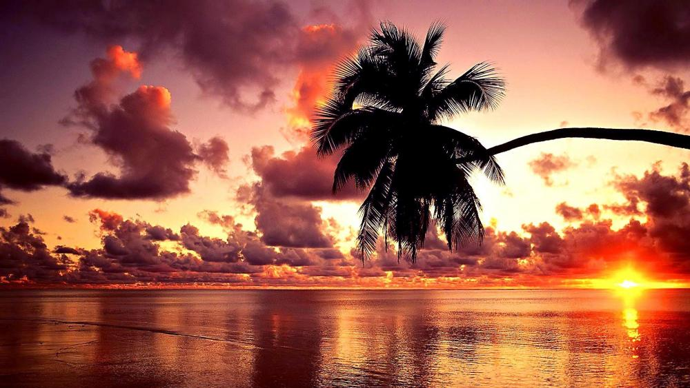 Palm tree in sunset wallpaper
