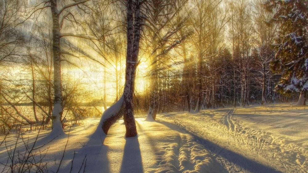 Winter sunrise in the snowy forest wallpaper