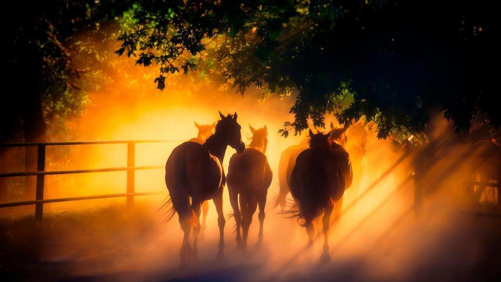 Horse herd in the morning sunlight wallpaper