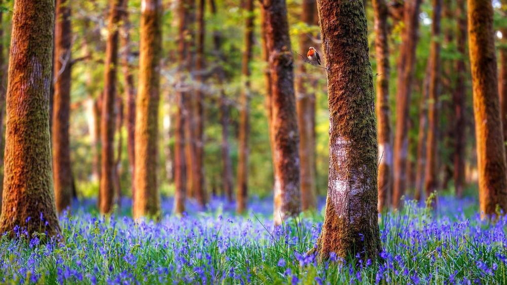 Blue flower carpet in the woods wallpaper
