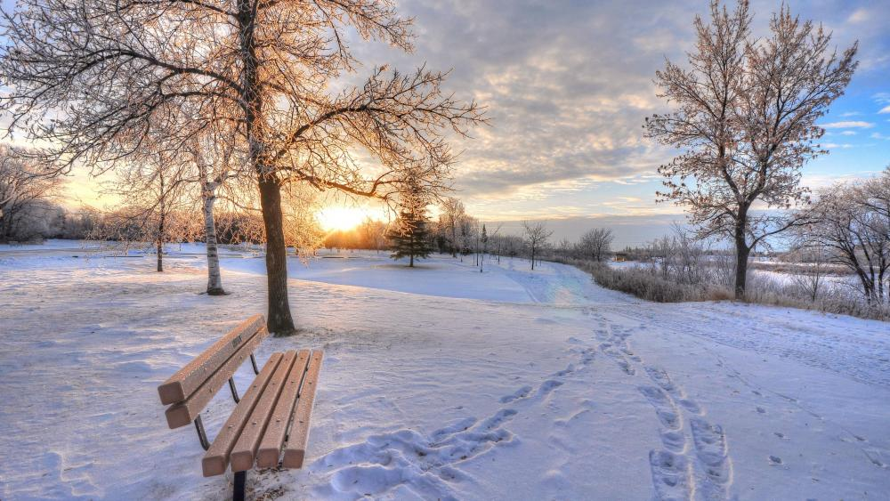 Snowy park at dawn wallpaper