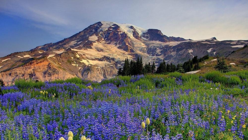 Nisqually Glacier, Mount Rainier National Park wallpaper