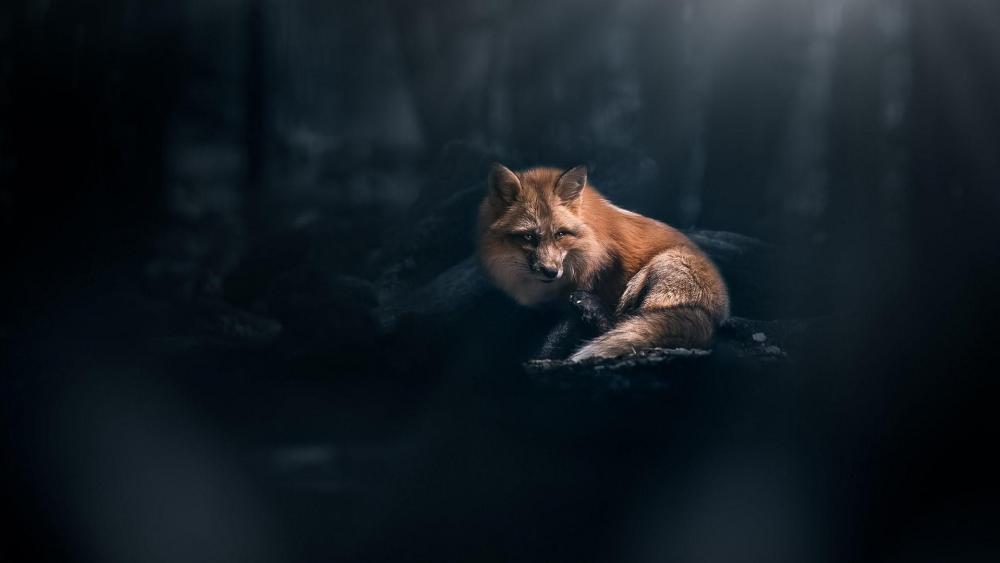 Fox in the dark forest wallpaper