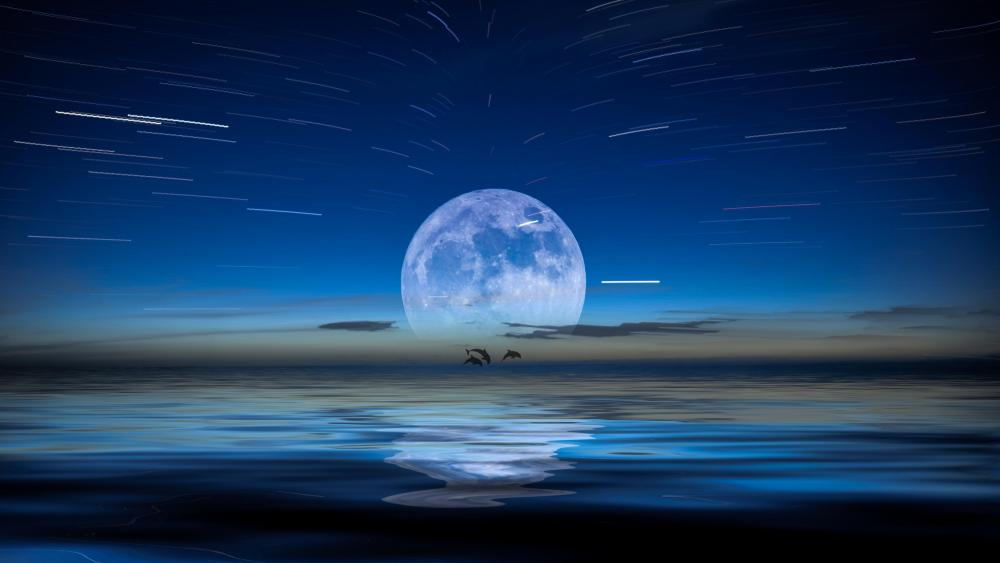 Dolphins and the Full moon wallpaper