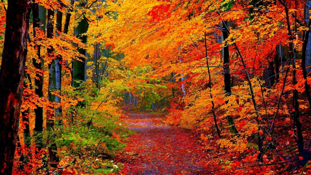 Autumn colors wallpaper