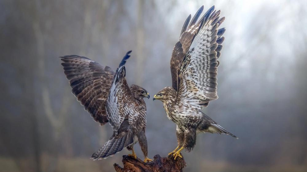 Falcon dance wallpaper