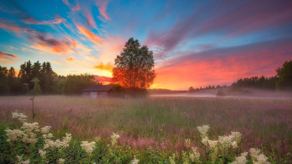 Misty sunrise wallpaper