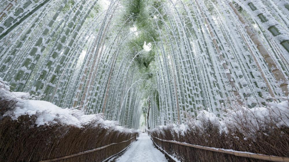 Arashiyama Bamboo Grove in winter wallpaper