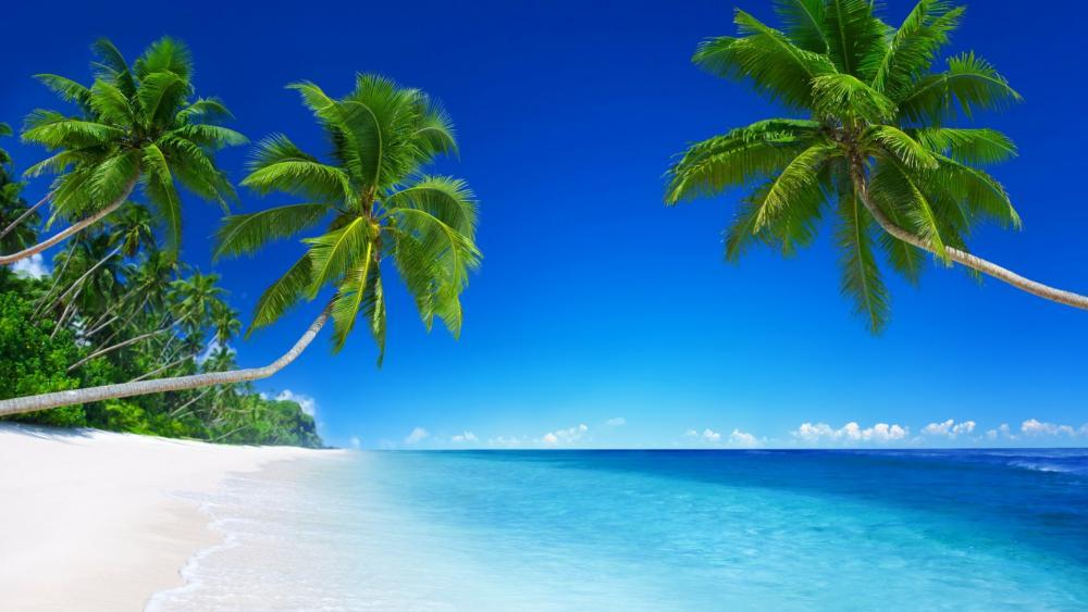White sand tropical beach wallpaper