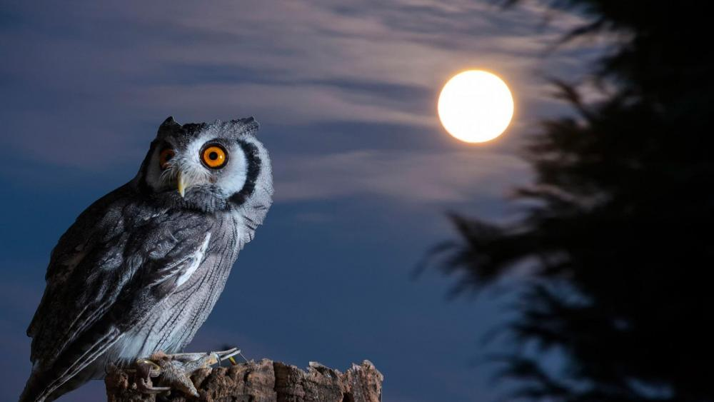 Owl under the moon wallpaper