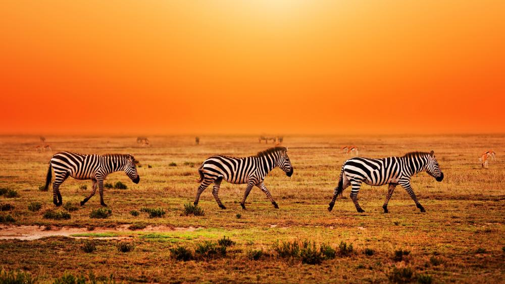 Serengeti National Park migration wallpaper