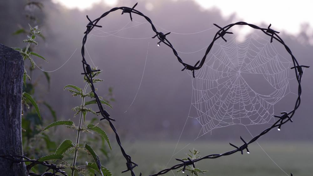 Barbed wire heart with spider web wallpaper