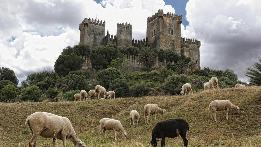 Castillo de Almodovar del Rio (Spain) wallpaper