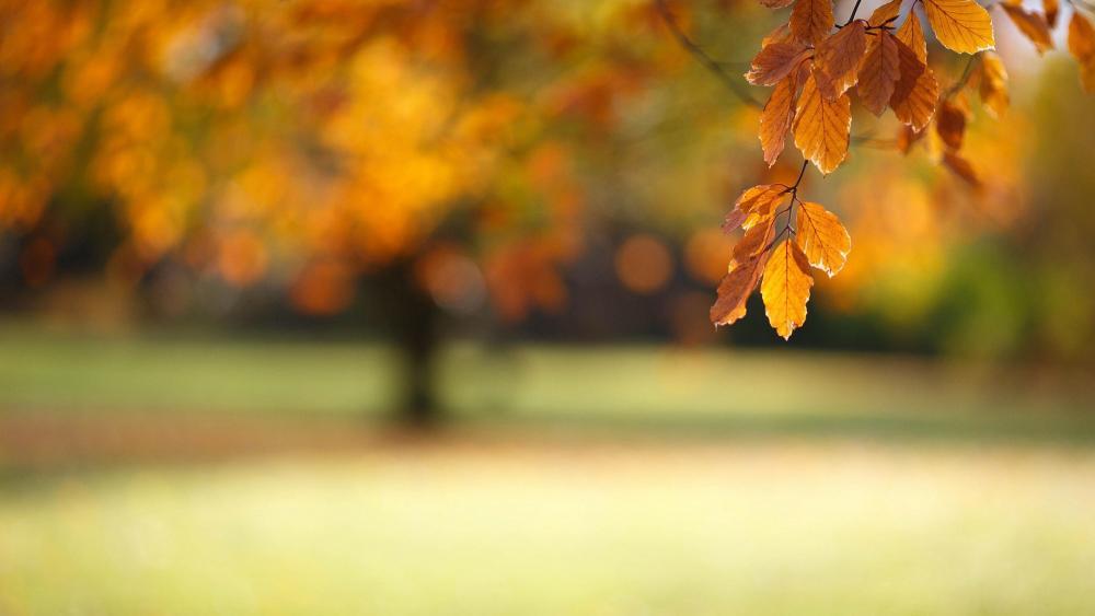 Yellow fall foliage wallpaper