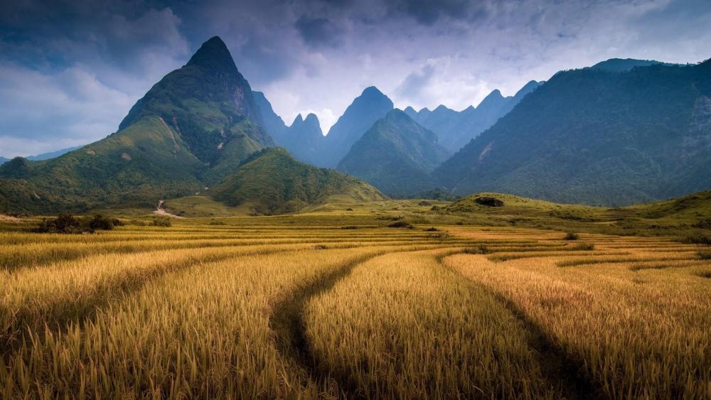 Fansipan Mountain in Sapa (Vietnam) wallpaper
