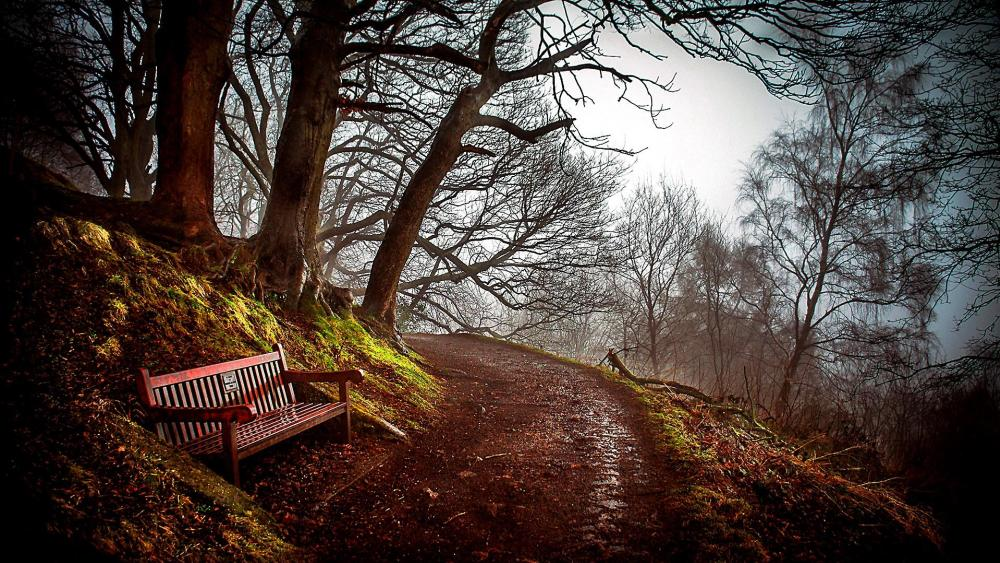 Late autumn forest with a bench along the path wallpaper