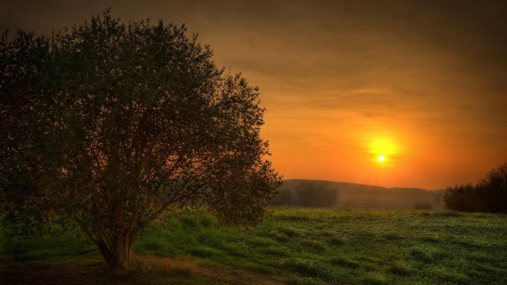 Calm meadow at sunset wallpaper