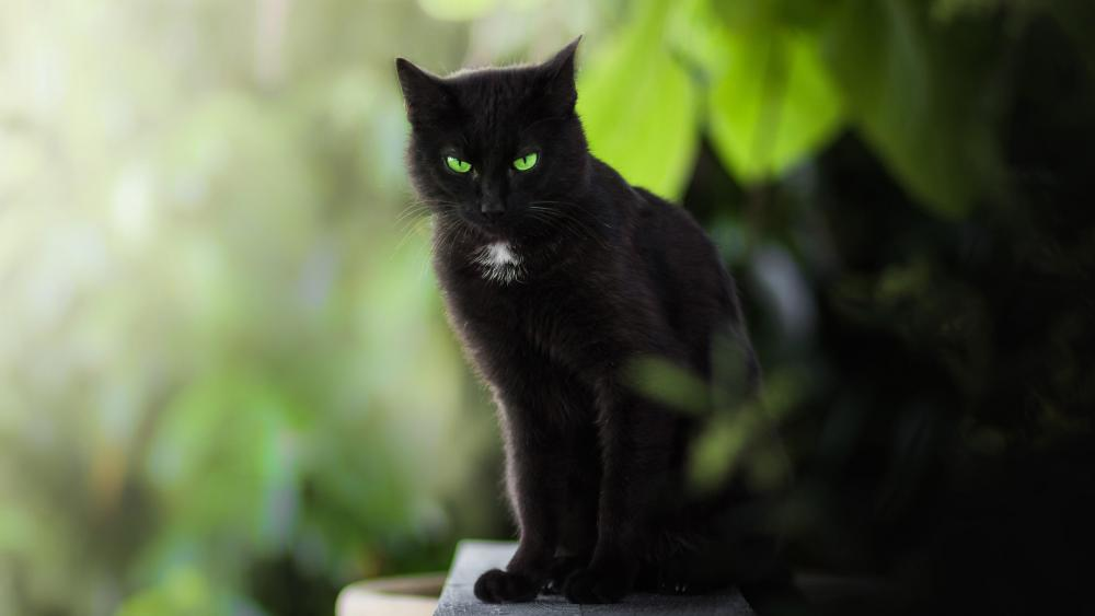 Black cat with emerald green eyes wallpaper