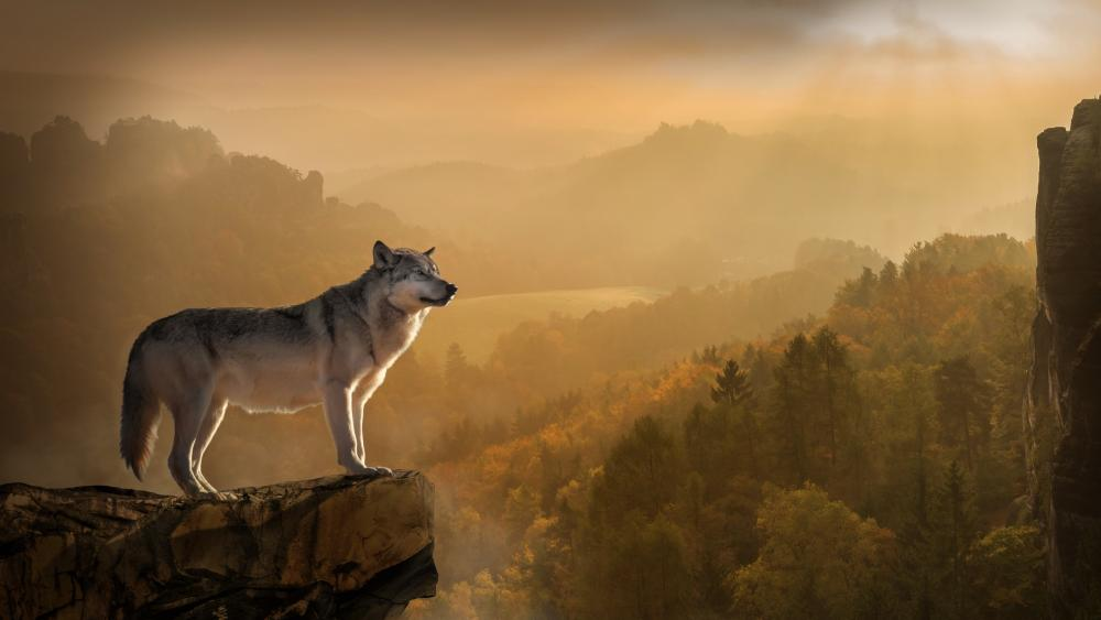 Gray wolf on a rock wallpaper