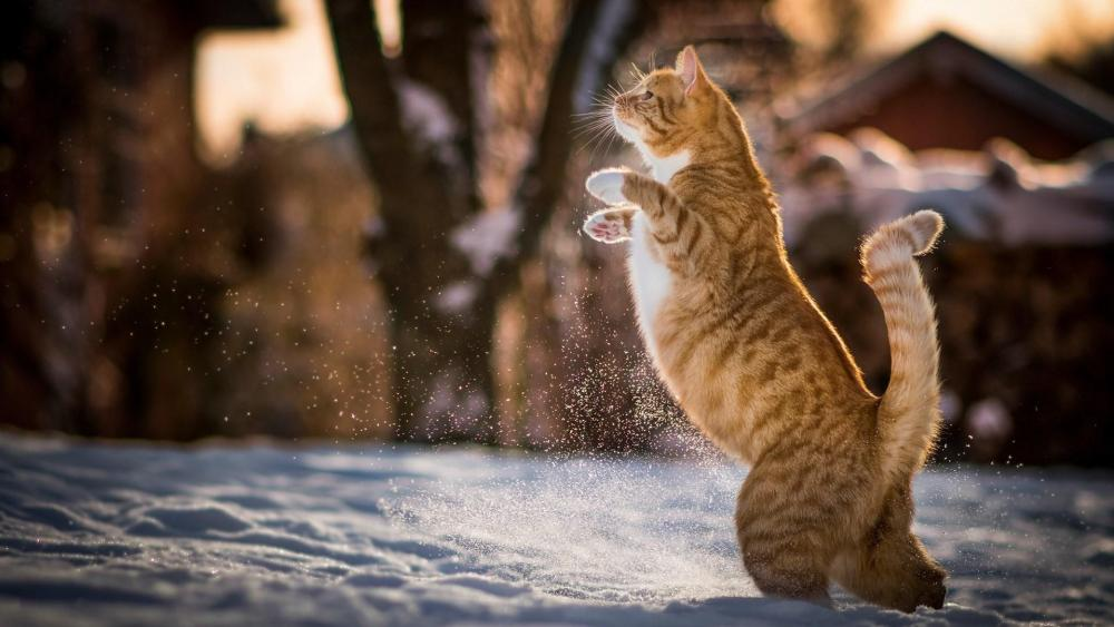 Cat standing on two legs wallpaper
