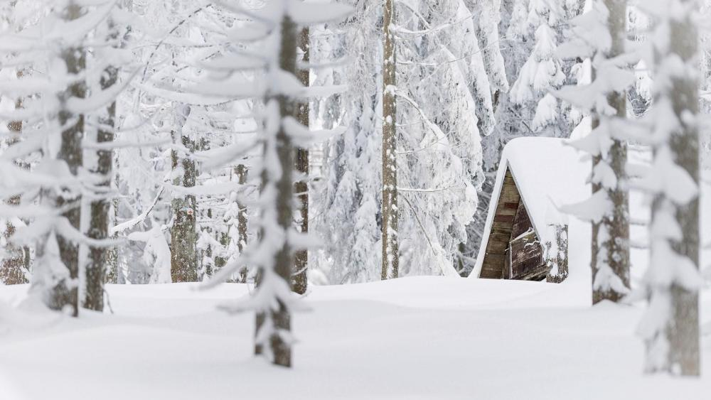 Hut in the snowy forest wallpaper