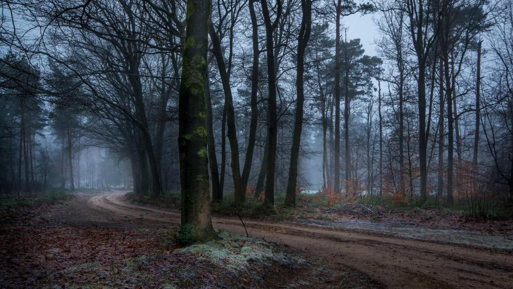 Pathway through the misty forrest wallpaper