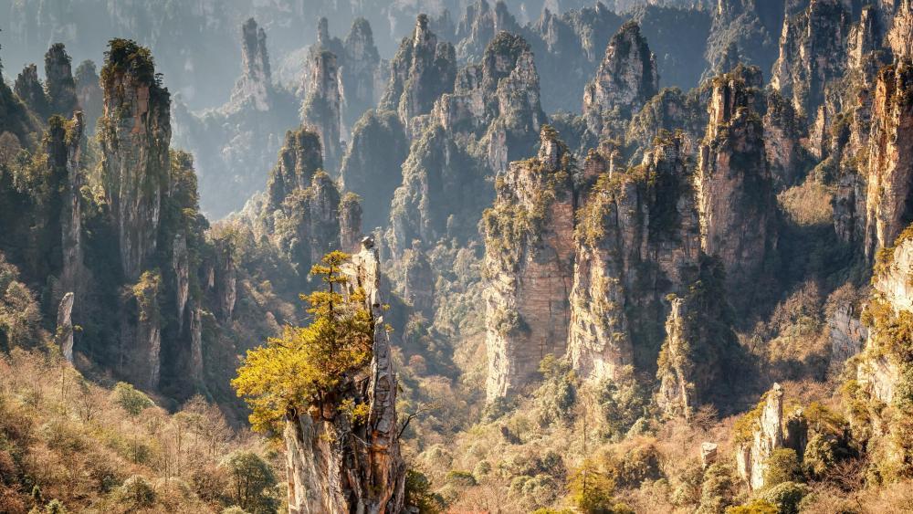 Zhangjiajie National Forest Park wallpaper
