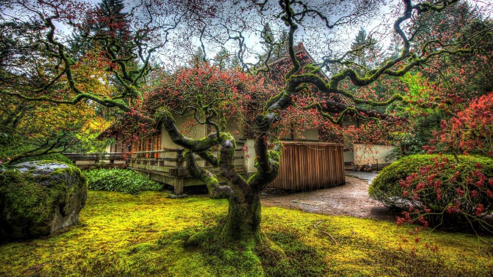 Portland Japanese Garden wallpaper