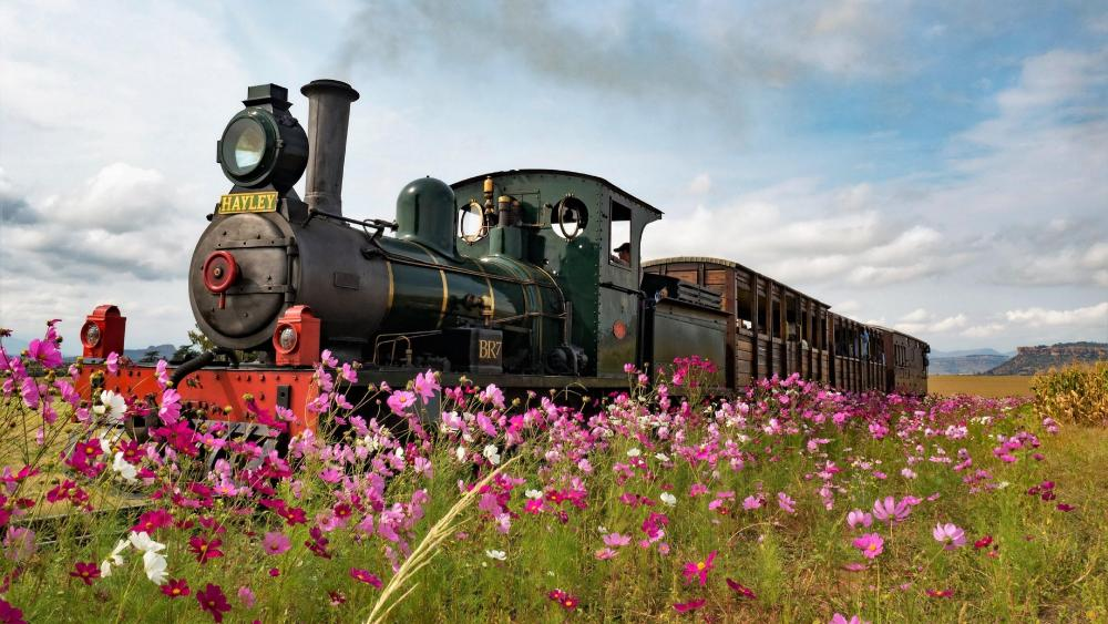 Steam locomotive in a spring field wallpaper