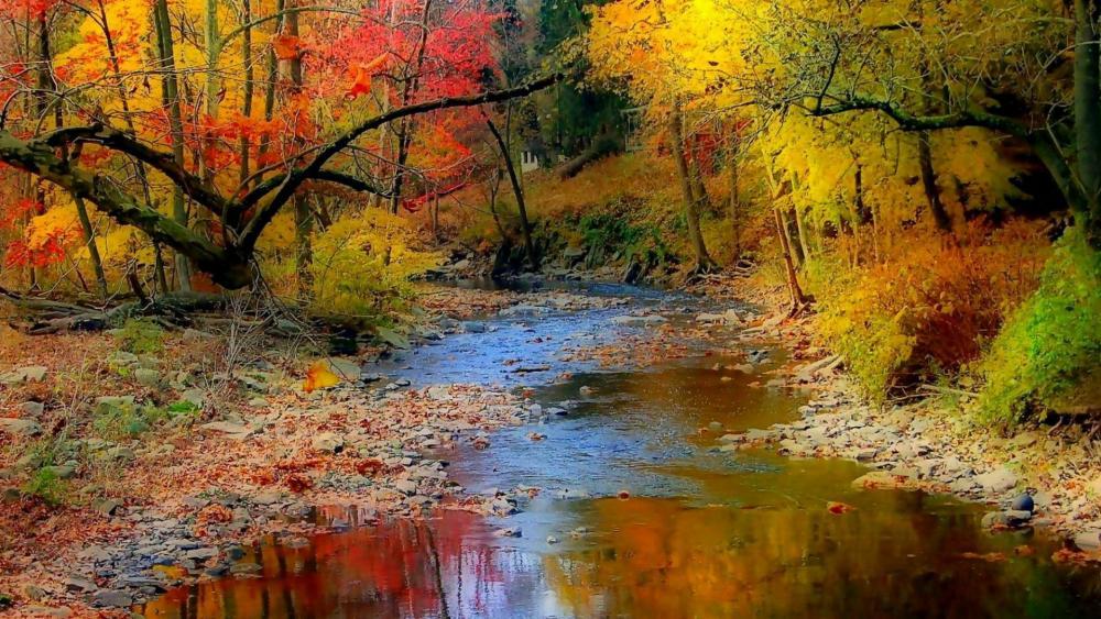Fall forest creek wallpaper