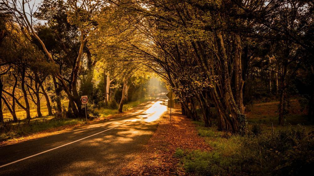 Road in the sunlight wallpaper