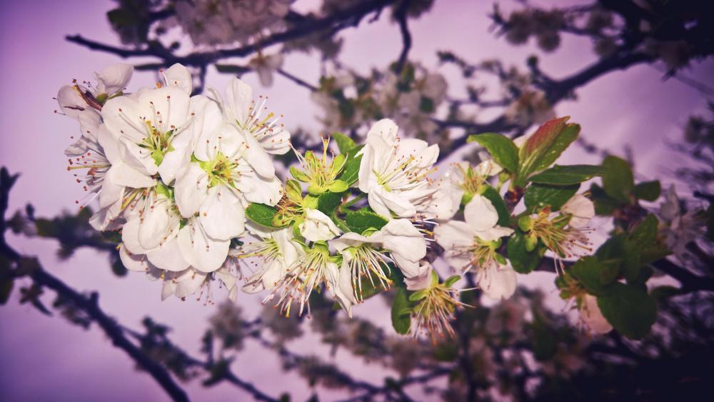 Blooming twig wallpaper