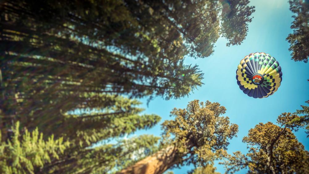 Hot Air Balloon - Worm's eye view photography wallpaper