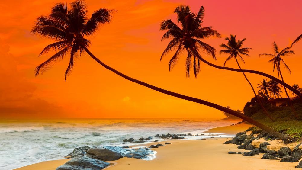Summer sunset (Sri Lanka) wallpaper