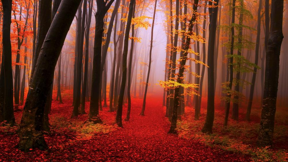 Foggy autumn forest path wallpaper