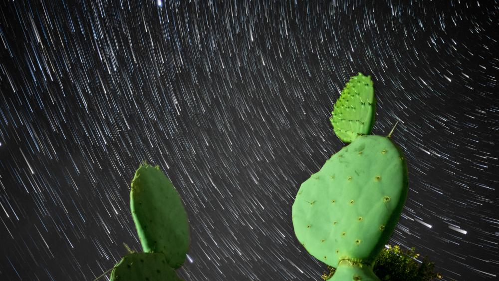 Prickly pear cactus under the star trails wallpaper