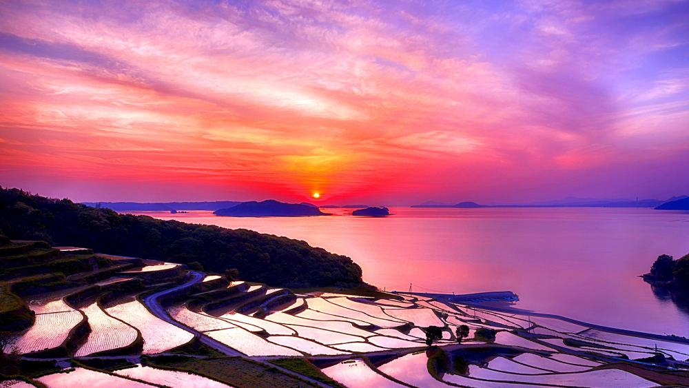 Flooded terraces at sunset wallpaper