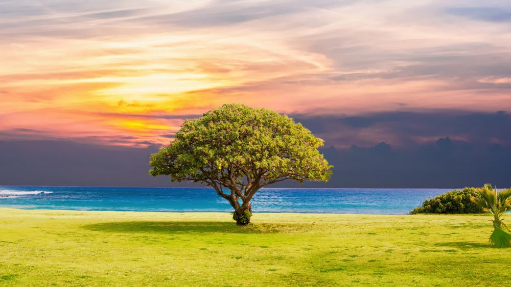 Lone tree in the shore wallpaper