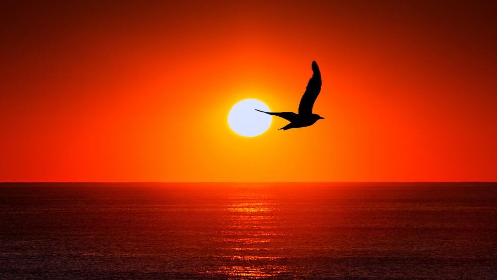 Bird silhouette in sunset wallpaper