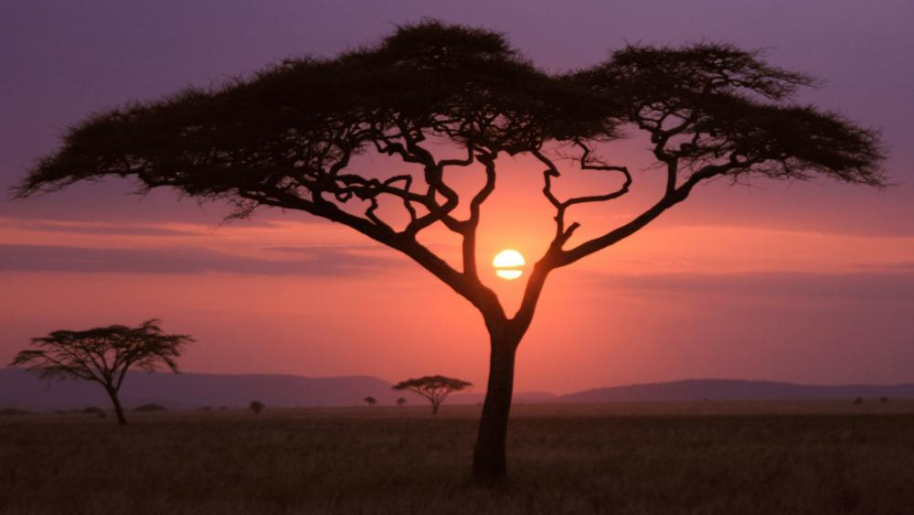 African sunset wallpaper