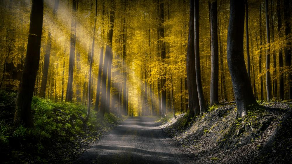 Sunlight in the forest wallpaper