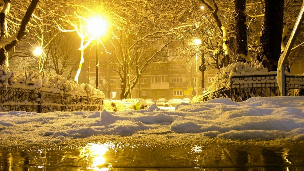 Winter night in the park wallpaper