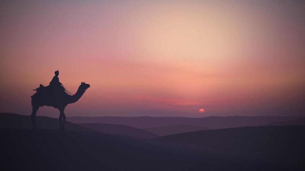 Camel silhouette in desert at sunset wallpaper