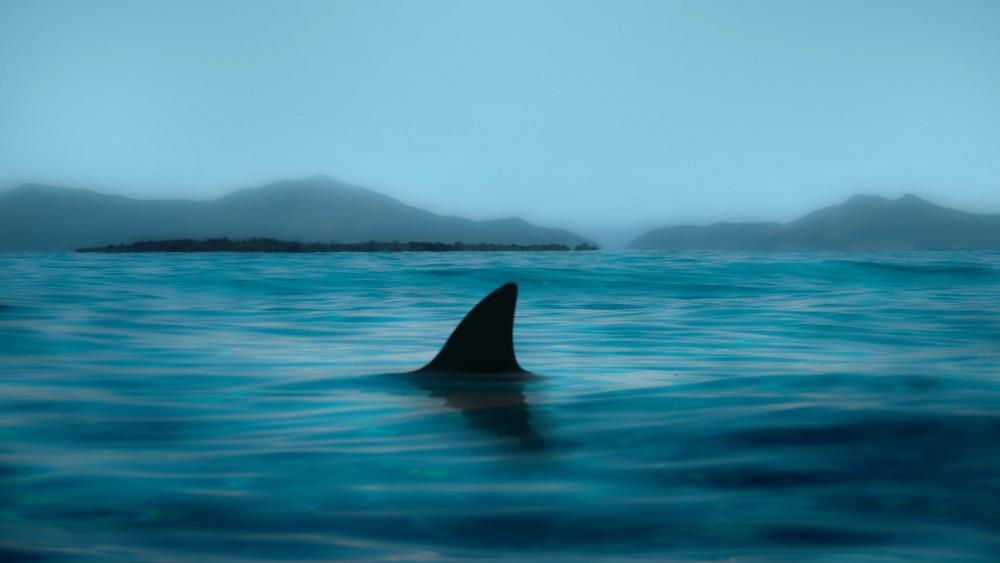 Dark Shark wallpaper