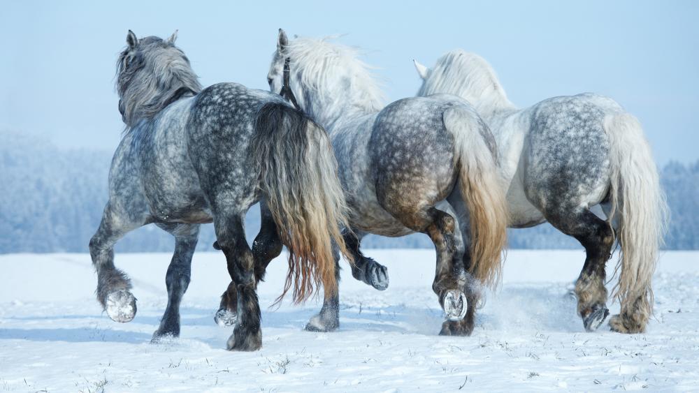 Horses in snow wallpaper