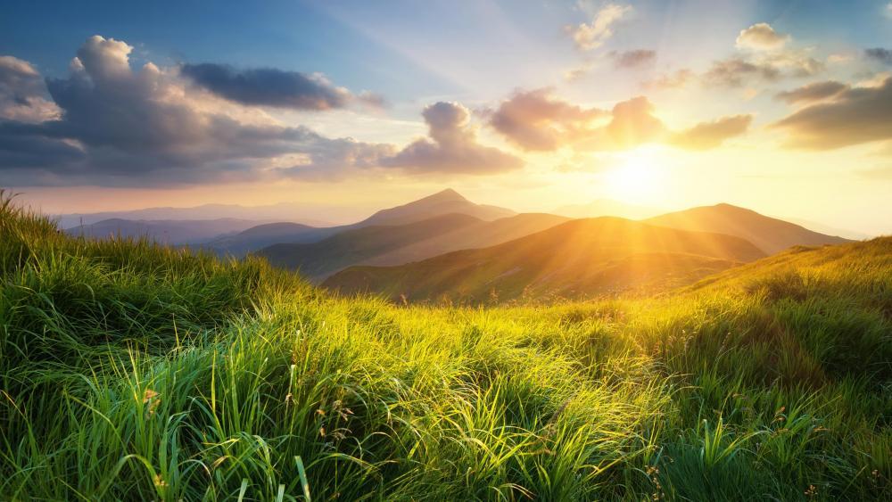 Green grass and sunshine wallpaper