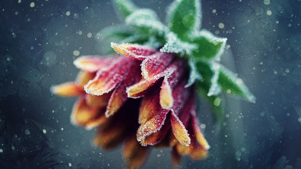 Frozen flower wallpaper