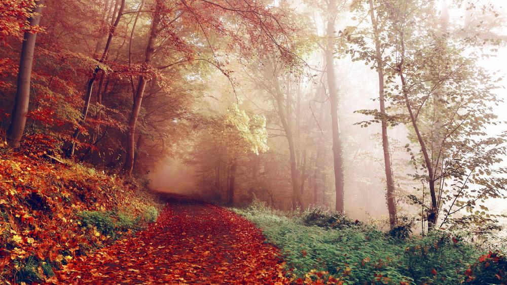 Foggy autumn path wallpaper