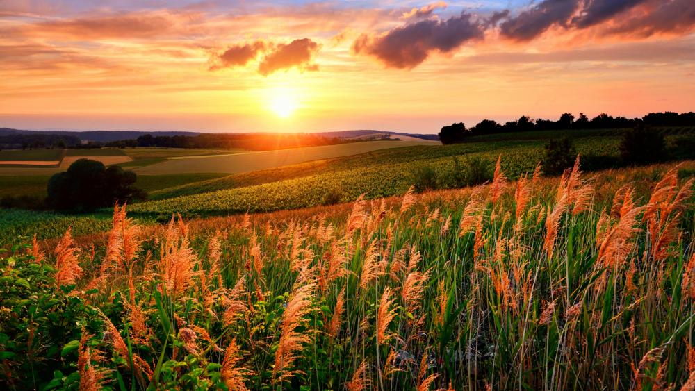Grassy slopes in the setting sun wallpaper