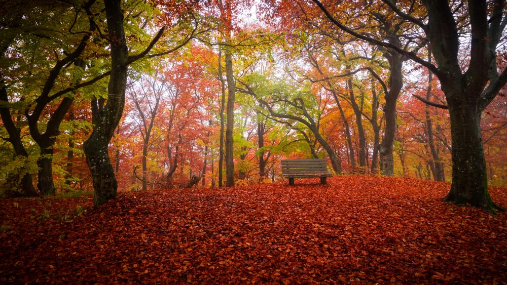 Autumn park with a bench wallpaper